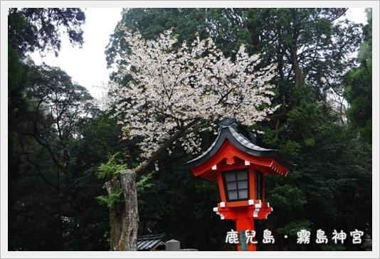 kirishima11.JPG