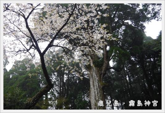kirishima21.JPG