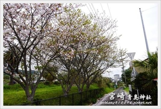 aoishima33.jpg