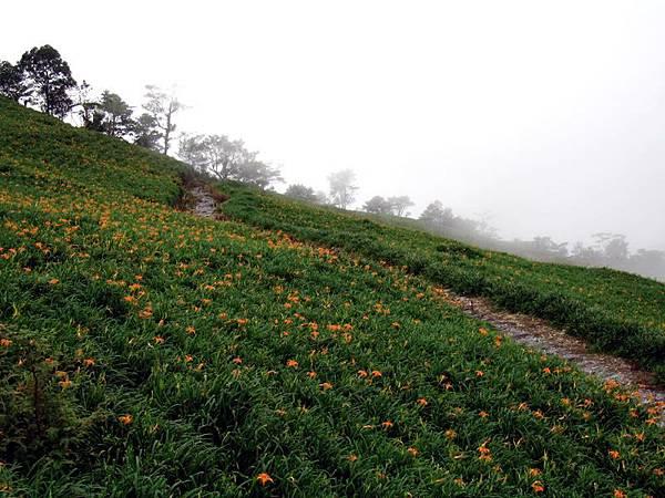 迷霧籠罩金針山