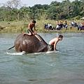 與大象共浴