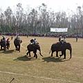世界唯一的大象馬球賽