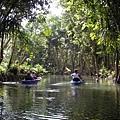 熱帶雨林景觀