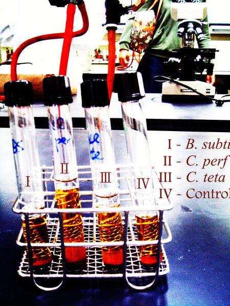 實驗26 - 梭狀芽孢桿菌之厭氧培養