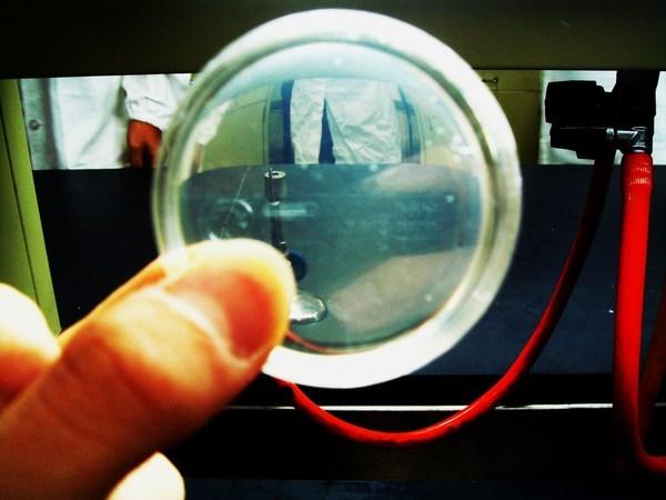 實驗33 - 黴漿體