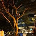 安那@20110917 SNAPPP表演