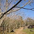 堰塞湖景004.jpg