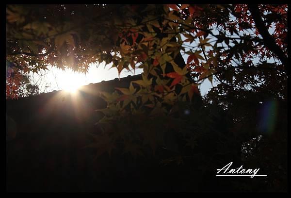 京都,想念的秋5.jpg