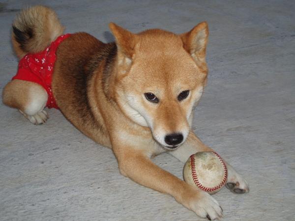誰多不能搶我的球