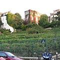 巴黎市區唯一的葡萄園