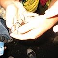 孩子們摸蜘蛛