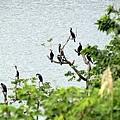 棲息在湖邊的侯鳥