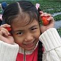 2008.1.24關西採草莓