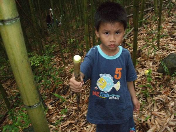 青青桂採竹筍