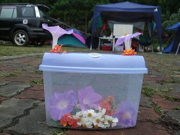 蘇雨桐佈置的花籃