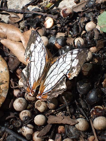 媽媽無聊在岸邊照蝴蝶,好多蝴蝶喔!