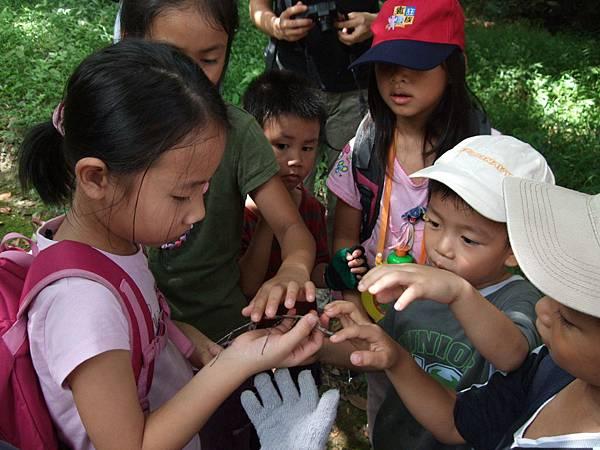 在路上看到一隻竹節蟲,大家搶著摸