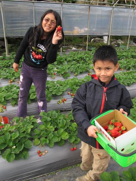 2010-12-26內湖清香農場 (17).JPG