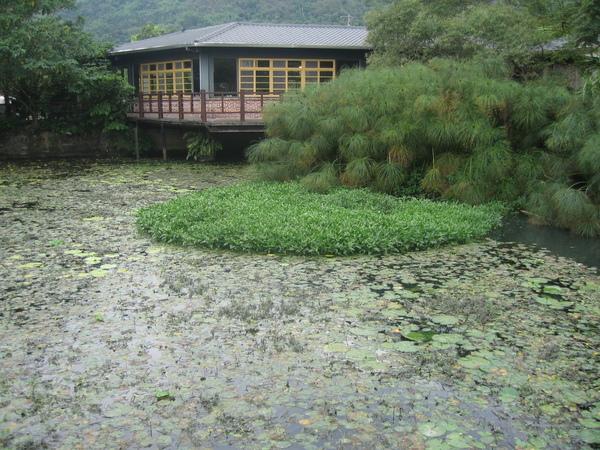 2009.7.1自然課五天花蓮玩耍行 (97).jpg