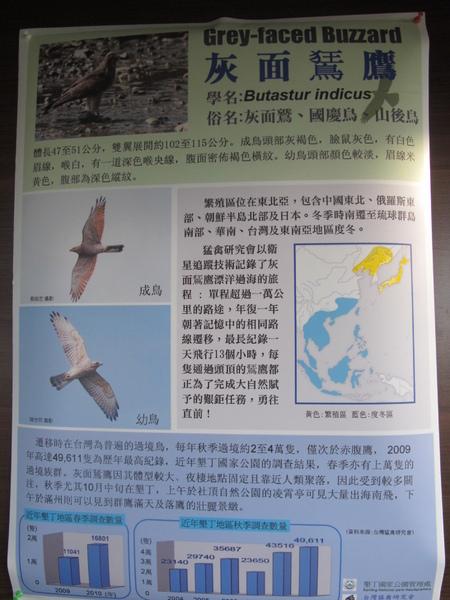小樹老師墾丁賞鳥 154.JPG