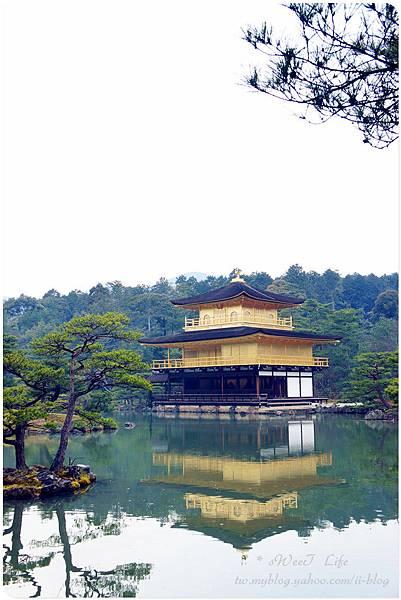 京都-金閣寺 (9).JPG