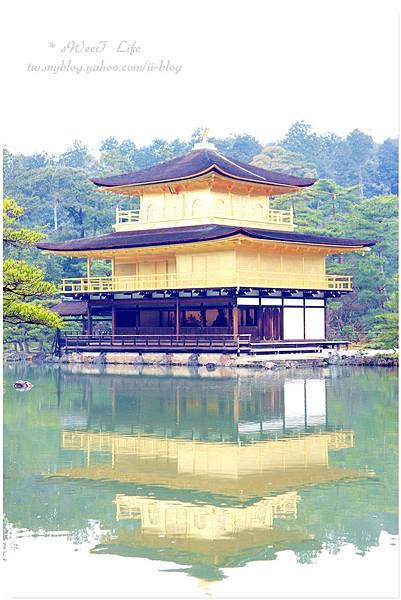京都-金閣寺 (10).JPG