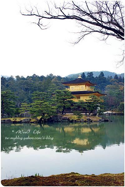 京都-金閣寺 (15).JPG