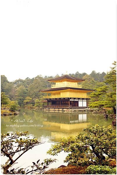 京都-金閣寺 (18).JPG