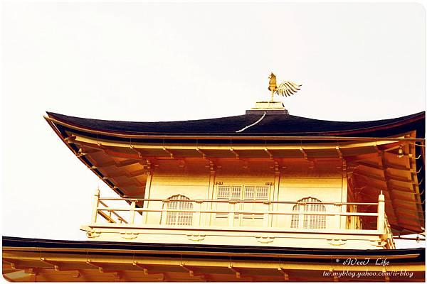 京都-金閣寺 (23).JPG