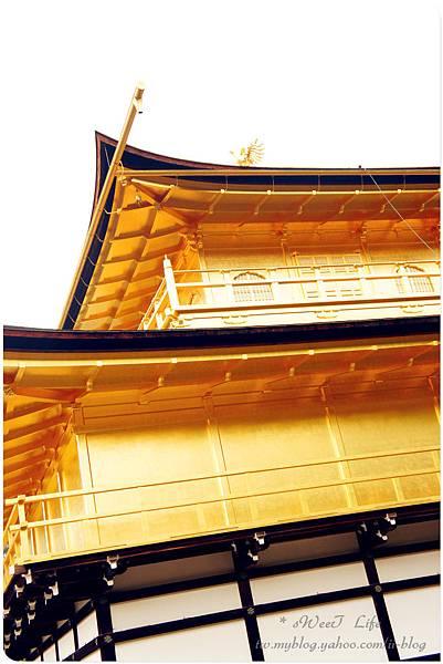 京都-金閣寺 (26).JPG