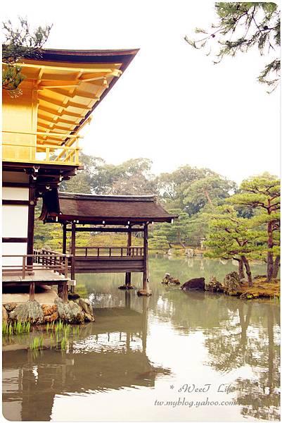 京都-金閣寺 (29).JPG