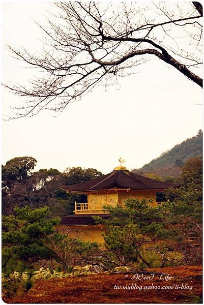 京都-金閣寺 (33).JPG