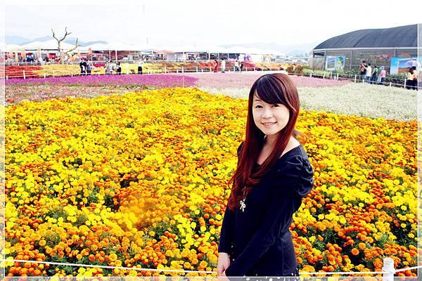 2012新社花海 (1).JPG