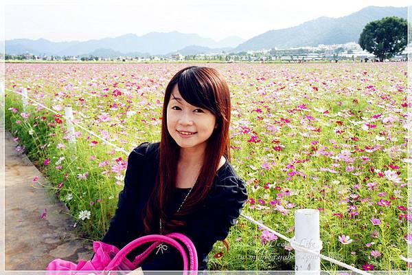 2012新社花海 (4).JPG