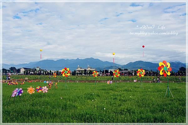 2012新社花海 (7).JPG