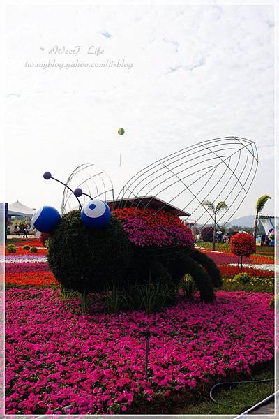 2012新社花海 (21).jpg