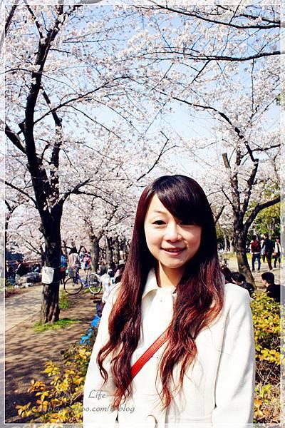 大阪城 (29).JPG
