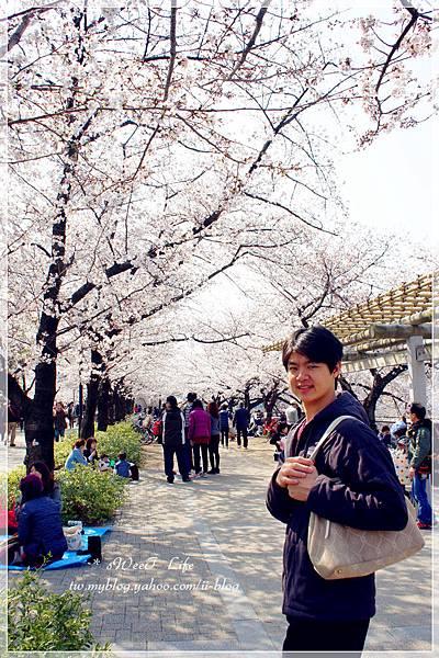 大阪城 (33).JPG