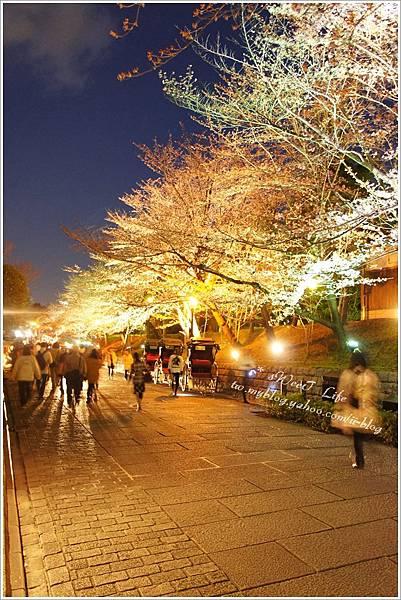 京都-夜櫻.JPG