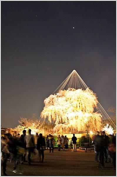 【2012關西甜滋滋蜜月旅行】- 圓山公園賞夜櫻 (4).JPG