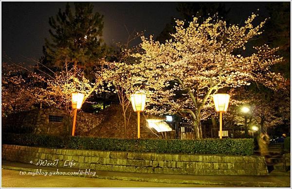 【2012關西甜滋滋蜜月旅行】- 圓山公園賞夜櫻 (5).JPG