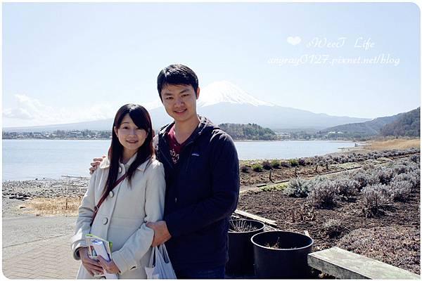 河口湖自然生活館 (17).JPG