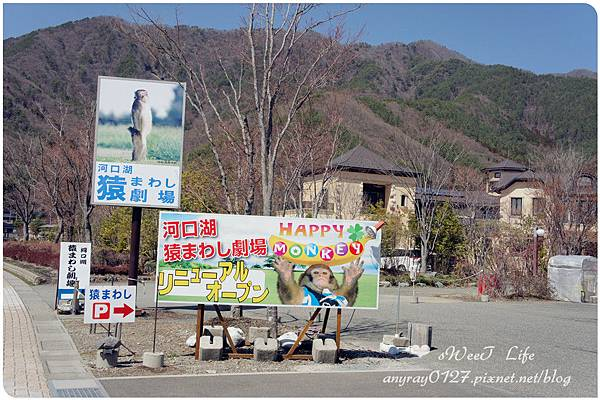 河口湖尋富士山 (4).JPG