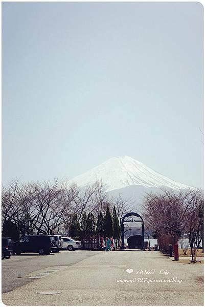 河口湖尋富士山 (39).JPG