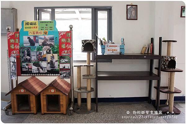 台北-猴硐貓村 (41).JPG