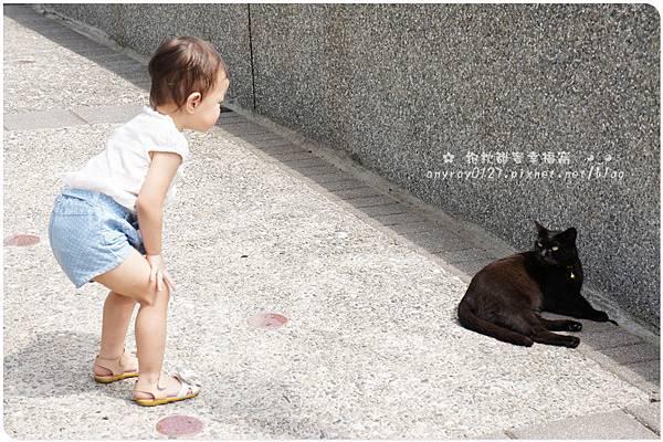 台北-猴硐貓村 (16).JPG