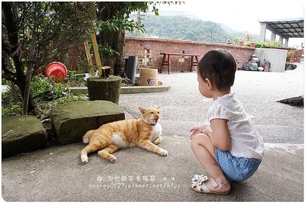 台北-猴硐貓村 (24).JPG