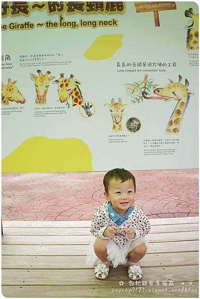 晴晴初遊木柵動物園 (7).JPG