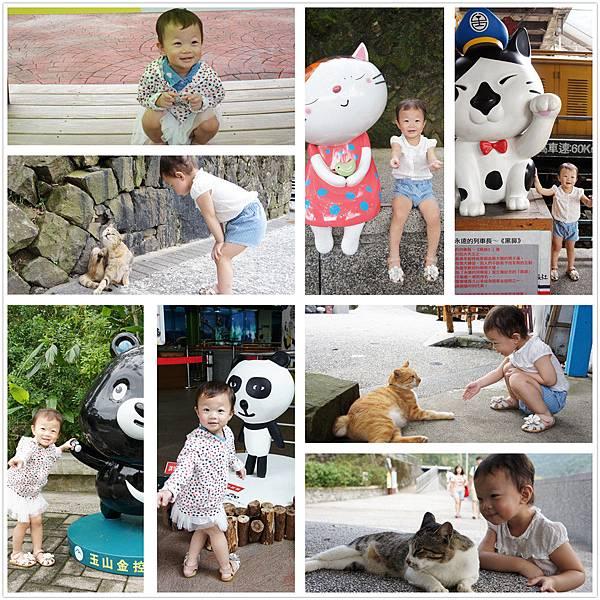台北找動物之旅