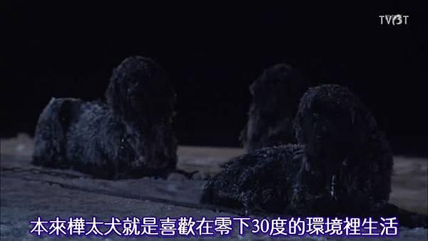 樺太犬喜歡的溫度.jpg